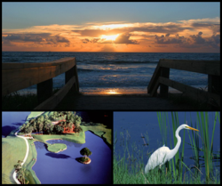 Ponte vedra collage