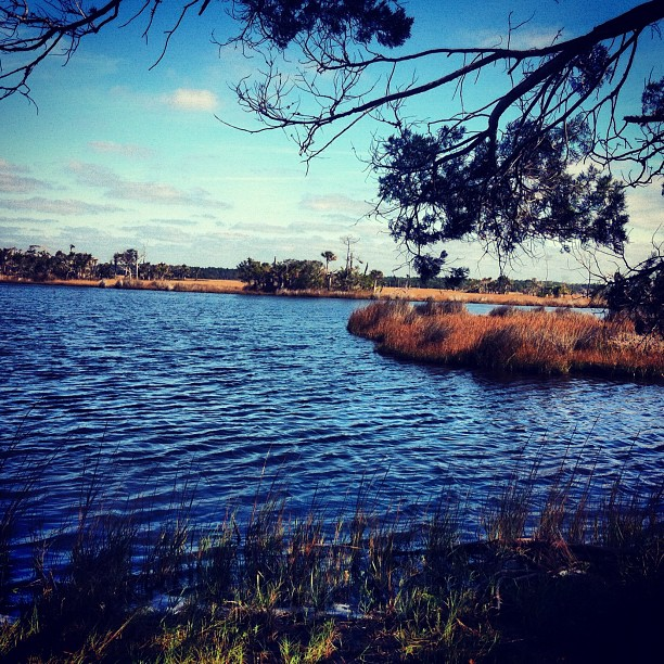 The Nocatee Preserve