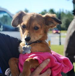 Pet adoptions at Nocatee Farmers Market