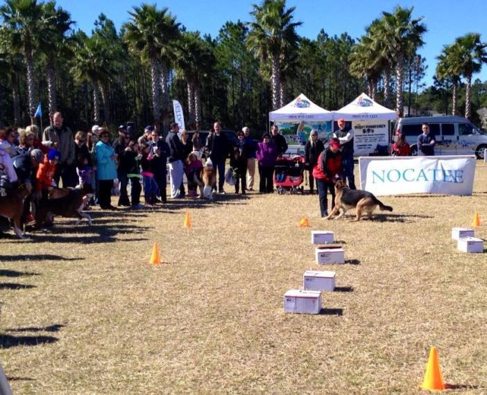 Nocatee Farmers Market Dog Obedience Demos