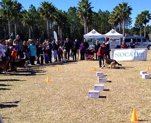 Nocatee Farmers Market Dog Obedience Demos