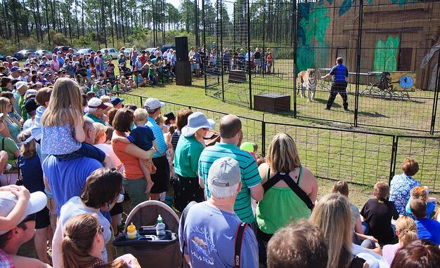 Nocatee Farmers Market Tiger Show