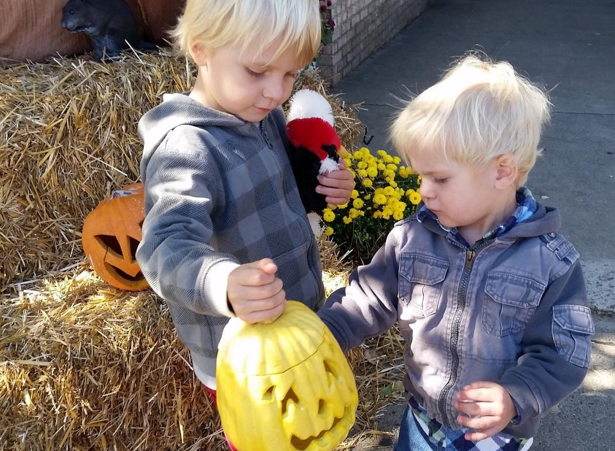 Picking up pumpkins at Halloween