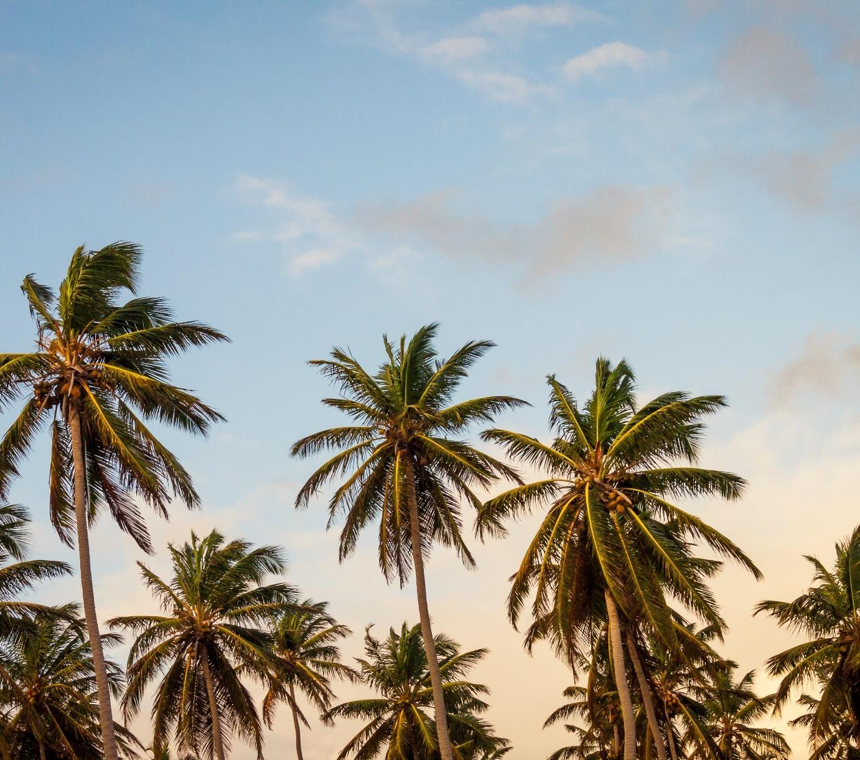 palms-1.jpg