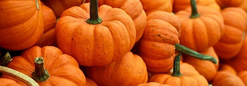pumpkin - halloween - fall - pumpkin patch blog header 2-1.jpg
