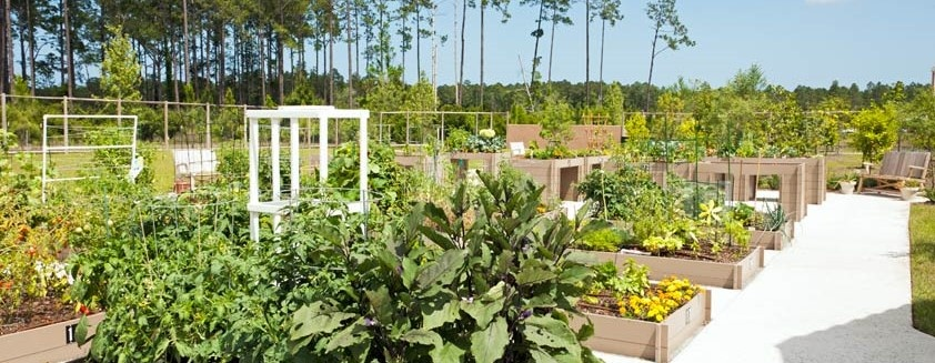 Community Garden in Del Webb