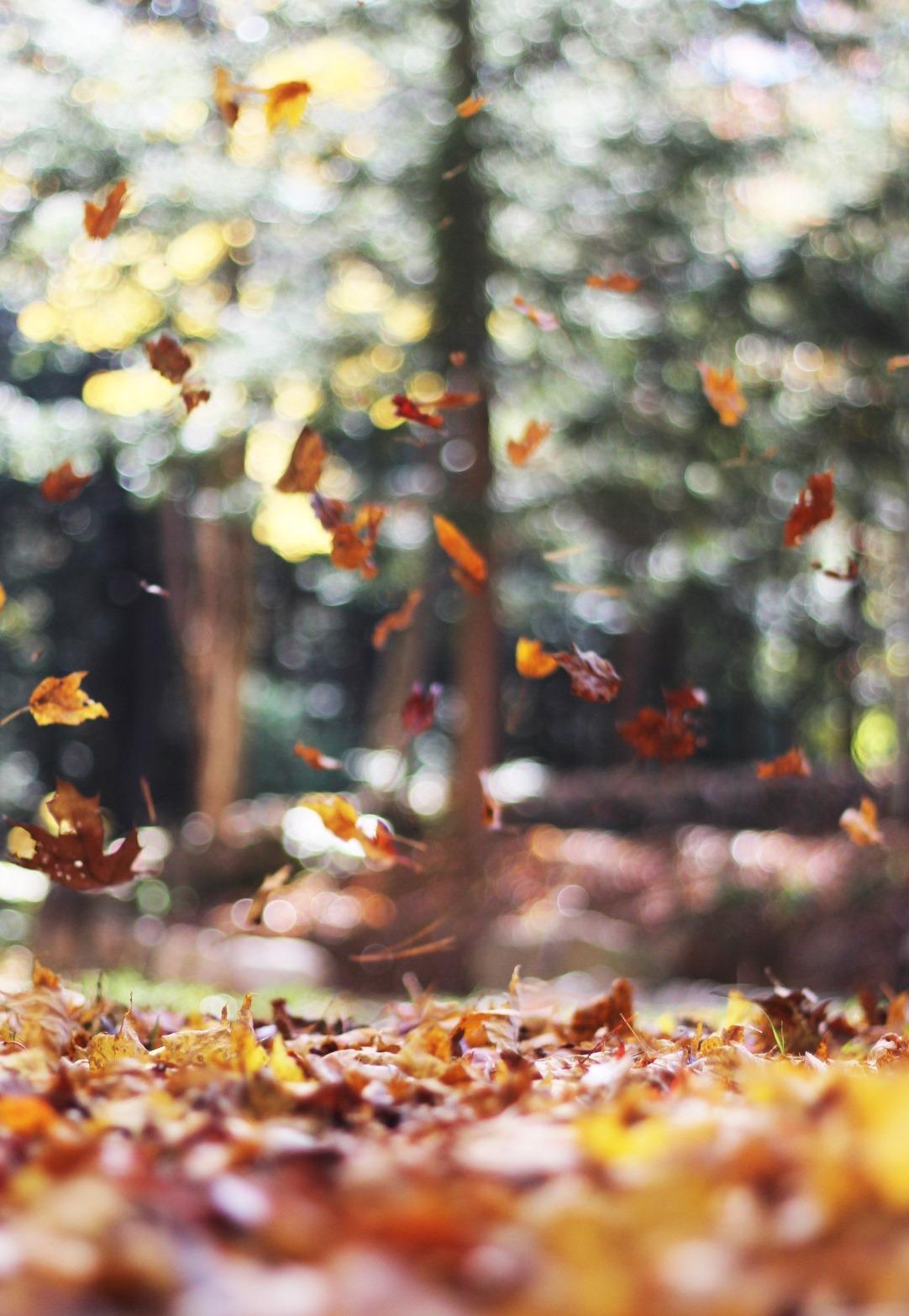 seasonal autumn home decor